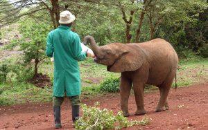 matning av babyelefant